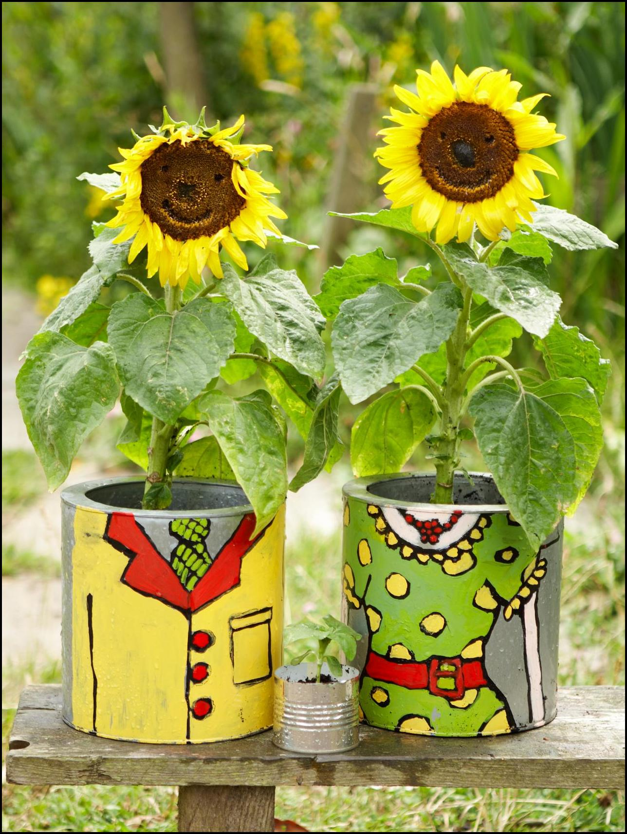 Growing Sunflowers In Pots