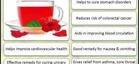Hibiscus Flower Tea Benefits
