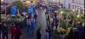 San Francisco Orchid Show
