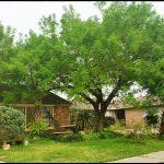 Tree Service Houston Tx