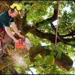 Tree Service San Antonio