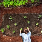 How To Plant Vegetables