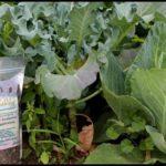 Best Organic Fertilizer For Vegetables