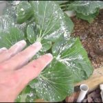 Organic Pesticides For Vegetable Gardens