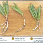 Ramps Vegetable Where To Find