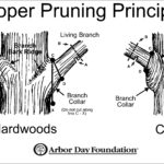 What Is Tree Pruning