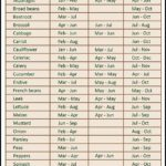 When To Start Planting Vegetables
